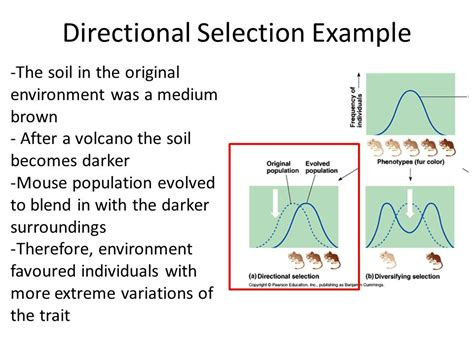 exle of selection types of selection ppt