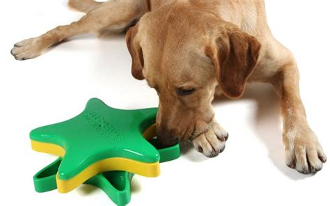 puzzle toys for dogs interactive puzzle toys for dogs as a brain exercise top tips