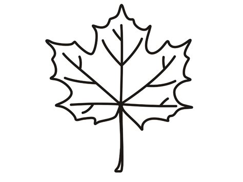 coloring page of a maple leaf maple leaf coloring pages bestofcoloring com