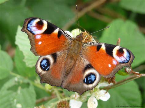il giardino delle farfalle un giardino delle farfalle nel parco di valverde