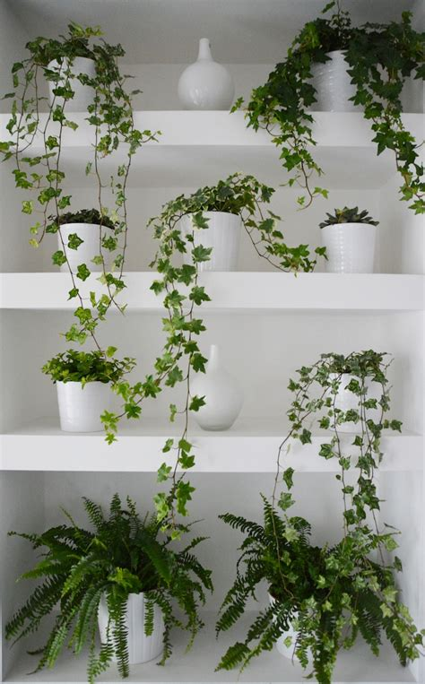 draping plants 100 draping plants build your own green wall flat