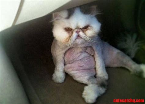 Larry The Mad Cat   Cute cats HQ Free pictures of funny