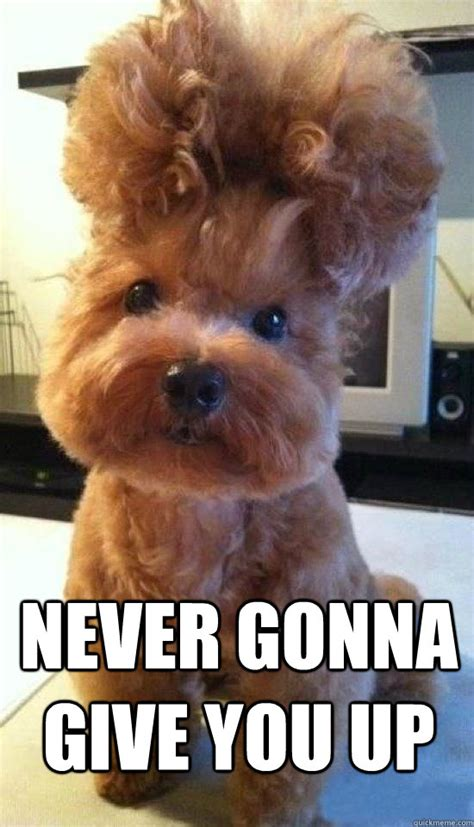 Rick Astley Never Gonna Give You Up Meme - never gonna give you up rick astley dog quickmeme