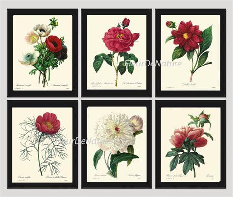 antique rose botanical garden wall art print by botanical print set of 6 art print redoute antique french