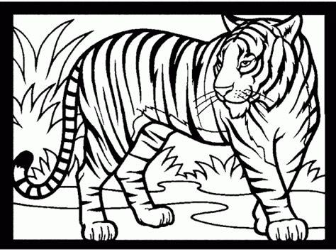 mewarnai gambar harimau tampak nyata contoh anak paud