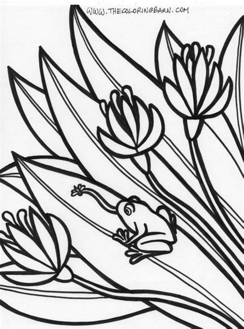 rainforest frog coloring page rainforest coloring pages free coloring home