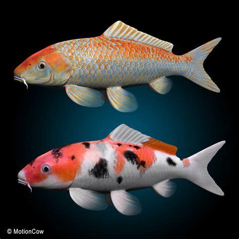 gambar tato ikan koi gambar ikan koi gambar pemandangan