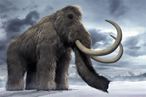 mammoth images mammoth free hd wallpapers images backgrounds
