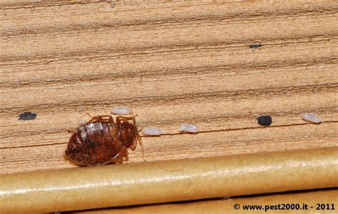 bed bugs in books bed bugs on books 171 got bed bugs bedbugger forums