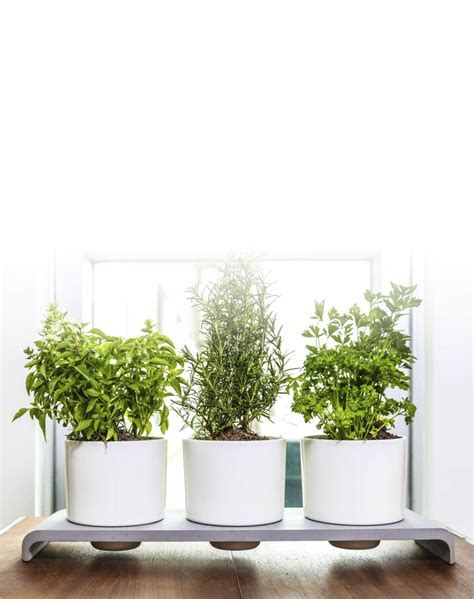 office herb garden u herb indoor garden gardens the office and office plants