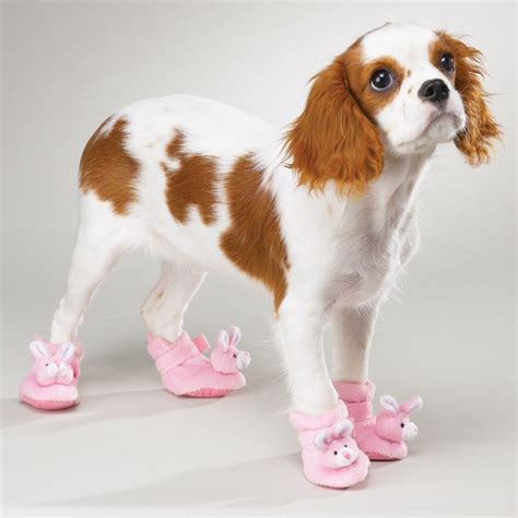 puppy booties dogs walking in shoes