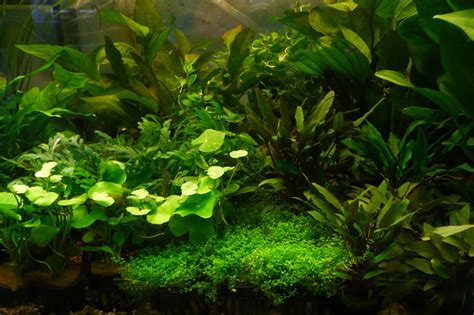 tropical water plants tropical fish conwy wales