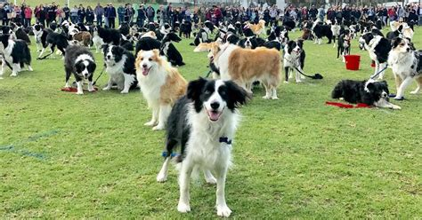 Vanity Fair Oscar Portraits 576 Border Collie Dogs Gather In One Place To Break A