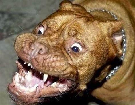 imagenes de animales feos imagenes de perros feos los bobotes