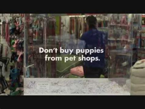 pet shop puppies for sale don t buy puppies from pet shops