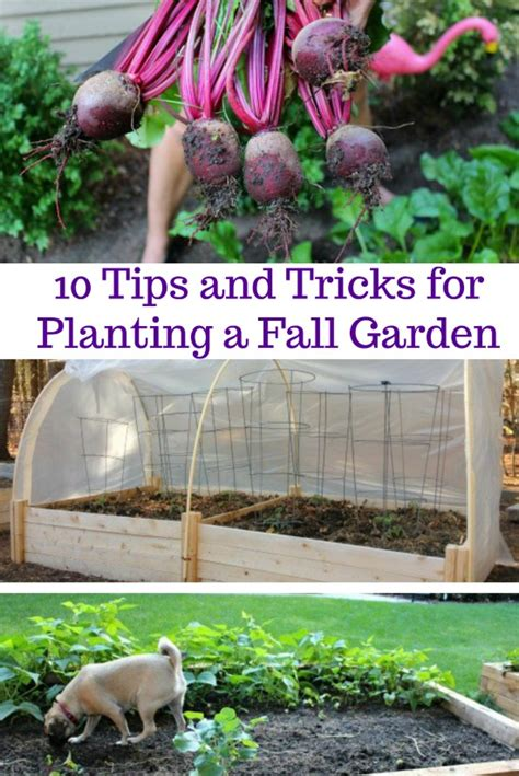 tips  tricks  planting  fall garden