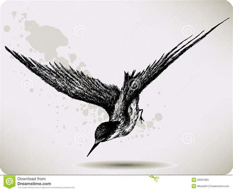 bird flying hand drawing vector illustration stock