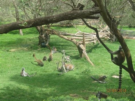 tisch family zoological gardens דוב סורי picture of tisch family zoological gardens