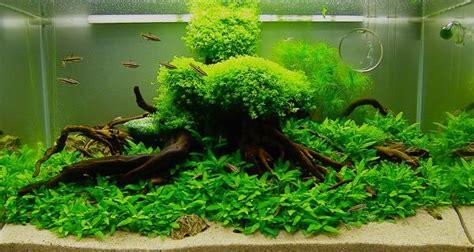 Hiasan Akuarium Tanaman Akuarium Plastik cara membuat aquascape yang murah dan sederhana