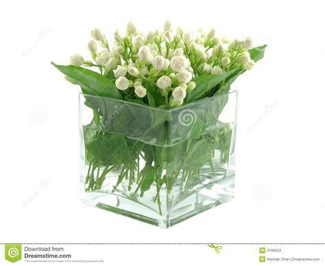 gelsomini in vaso gelsomini in vaso fotografie stock immagine 3195553