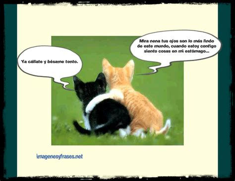 imagenes de amor chistosas para face imagenes chistosas para facebook dos gatos enamorados