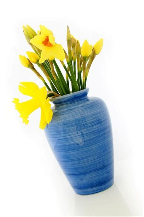 Daffodil Vase by Free Stock Photos Rgbstock Free Stock Images
