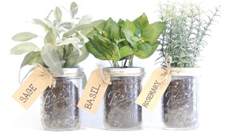 Windowsill Herb Planter 10 Important Tips To Create Your Own Indoor Herb Garden