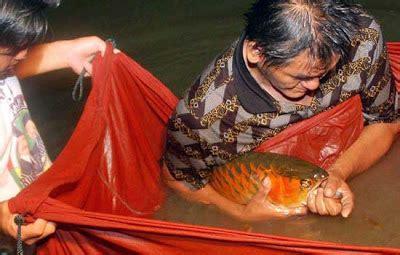 Pompa Aquarium Sekaligus Aerator animal care cara merawat ikan arwana