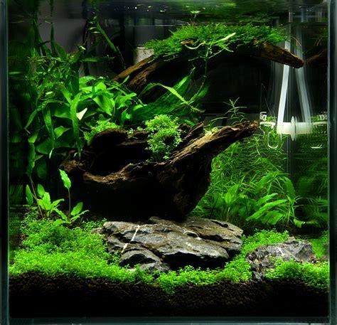 Aquascape Wood To Mogło Być Twoje Akwarium Peha 68 Akwarium W Stylu