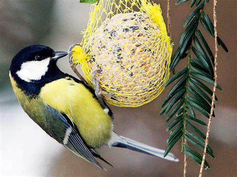Vogelarten Im Garten by Hilft Das Winterliche F 252 Ttern Den V 246 Geln Eigentlich Bildung Wissen Badische Zeitung