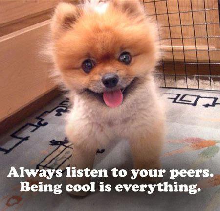 puppies quotes puppies quotes quotesgram