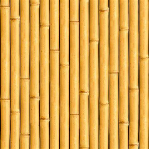 jenis jenis bambu hias lengkap  wallpaper gambar bambu