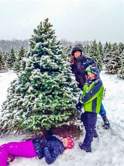 buy christmas tree cuttings permits for cutting trees now available