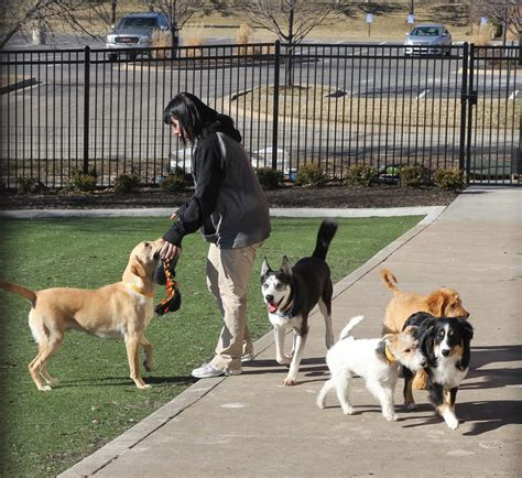 two dogs and a cat dogs and cats in of luxury at new pet club leawood lifestyle magazine