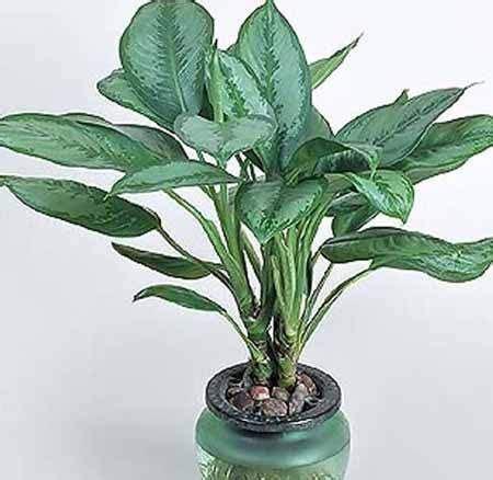 Tanaman Hias Peace Tanaman Pembersih Udara 15 tanaman hias pembersih udara dalam ruangan tanaman hias umumnya ditanam di luar ruangan