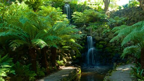 Royal Botanic Gardens Melbourne Waterfall Pictures View Images Of Australia