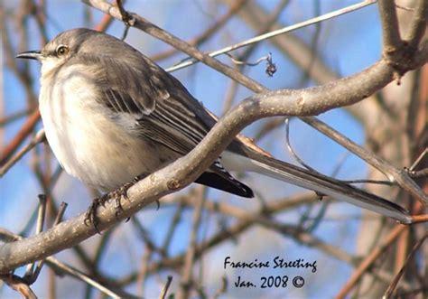 neilyworld birding ottawa ottawa local bird and nature