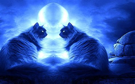 wallpaper cat night romancing night cats wallpaper 16249934 fanpop