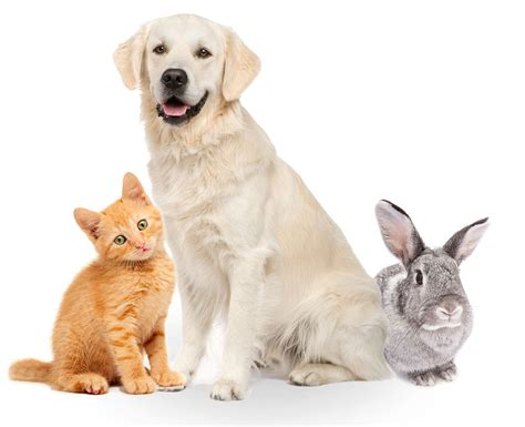 house insurance and dogs pet insurance get your pet insurance through pets at home