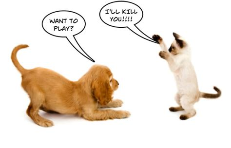 why do cats and dogs fight word of the day against spanishdict answers