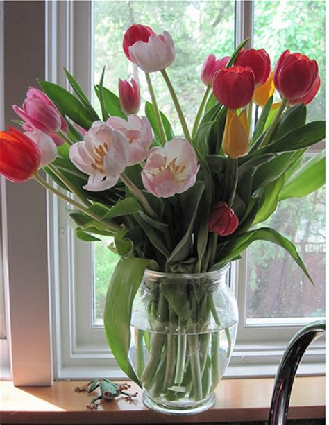 tulips in vase tulips mothers day flowers in glass vase