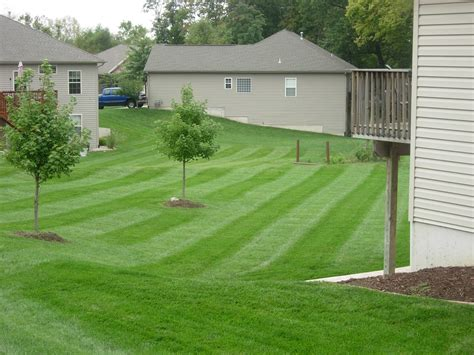 grizzly lawn care we the and science of