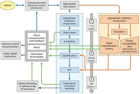 Antimicrobial Stewardship How The Microbiology Laboratory Can Right The Ship Clinical Antimicrobial Stewardship Policy Template