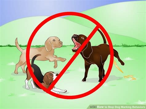 how to stop male dogs from marking in the house how to stop dog marking behaviors with pictures wikihow