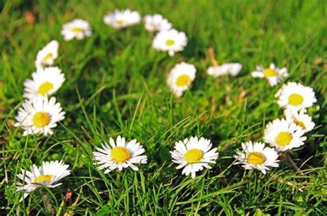 dei fiori fiori primavera fiori per cerimonie fiori di primavera