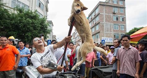 yulin festival yulin festival inside the controversial event in china