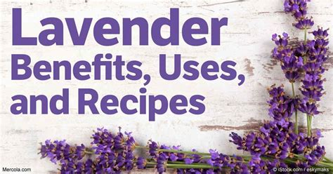 lavender benefits uses and recipes
