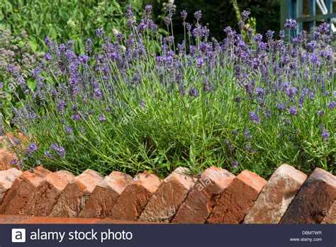 decorative path edging brick path edging in a sawtooth design bordering a