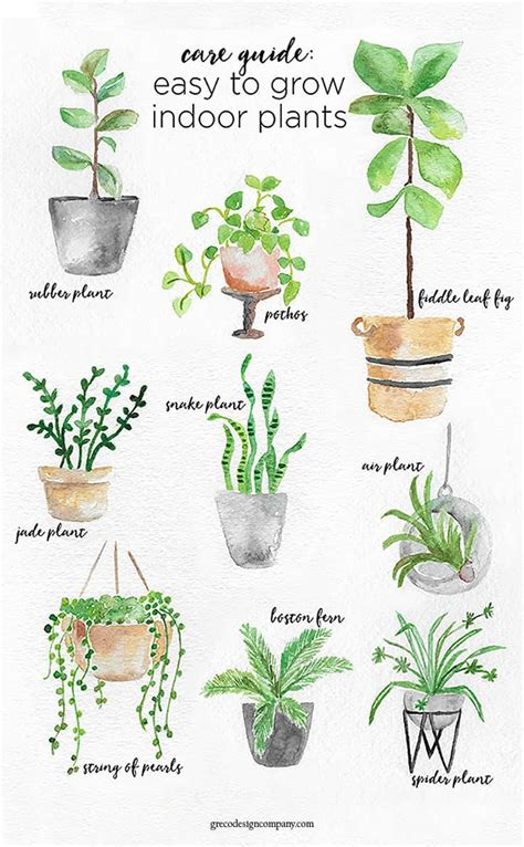 easy plants to grow inside a guide to caring for easy to grow indoor plants