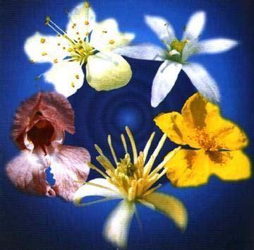 efficacia fiori di bach fiori di bach e rescue remedy a sostegno degli interventi